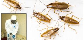 Detalles sobre el tratamiento de locales de diversos insectos: importantes matices.