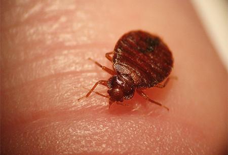 Los insectos pueden ser peligrosos para los humanos.