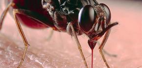 Sobre las picaduras de insectos y su tratamiento.