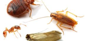 Cómo luchar contra los insectos caseros en el apartamento.