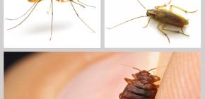 Repelentes de insectos insecticidas en el hogar: una revisión de drogas