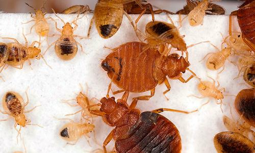 Métodos que ayudan a destruir completamente los insectos en el apartamento ...