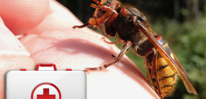 Qué hacer cuando una avispa muerde y cómo puede ser peligroso para la salud