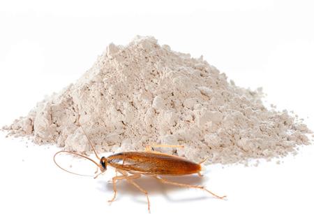 Polvos para el exterminio de cucarachas: una revisión de los medios efectivos