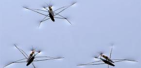 Detalles de los insectos de la vida de agua strider
