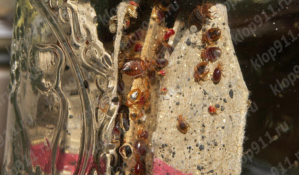 Individuos de diferentes edades en el nido.