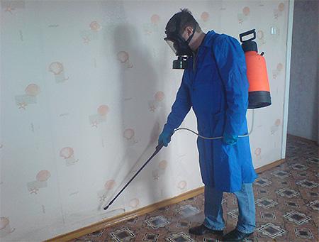 La desinsectación de las chinches por parte de profesionales es el método más efectivo para deshacerse de los insectos.