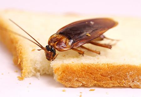 Deshacerse de las cucarachas en el apartamento