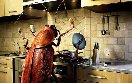 La limpieza en la cocina y en el apartamento en general es la clave para una lucha exitosa contra las cucarachas