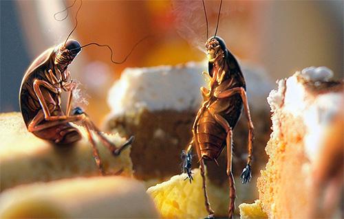 Residuos de comida sucios contribuyen a la cría de cucarachas.