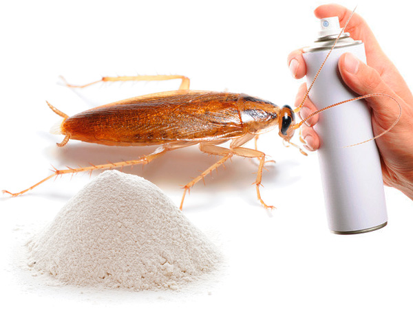 Elegir un remedio para las cucarachas en el apartamento ...
