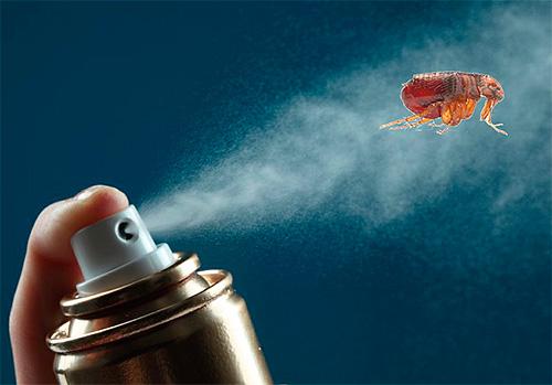 Elegir los medios más efectivos para combatir las pulgas en el apartamento.