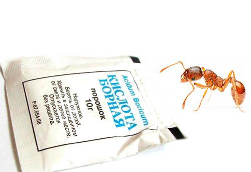El ácido bórico es un remedio popular eficaz para deshacerse de las hormigas domésticas.