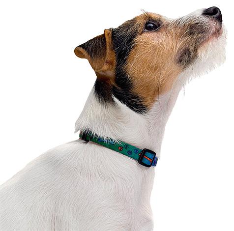 El collar correctamente usado elimina la dermatitis de contacto.