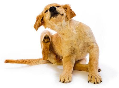 El collar debe seleccionarse teniendo en cuenta las características individuales de su mascota.