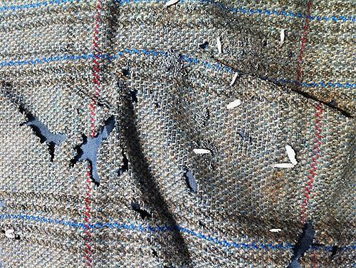 Cada larva de polilla es un nuevo agujero en su suéter o abrigo favorito