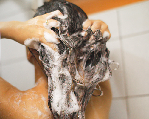 Los champús pediculicidas se deben aplicar sobre el cabello mojado.