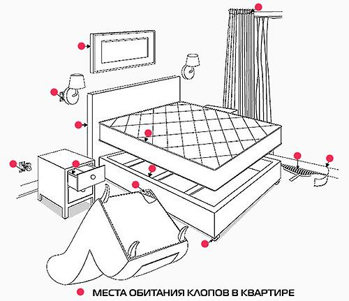 La imagen muestra los lugares en el apartamento, donde lo primero es buscar chinches