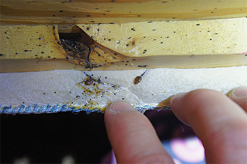 Si existe la sospecha de que las chinches han comenzado en el apartamento, en primer lugar, debe inspeccionar cuidadosamente los muebles, especialmente la cama.