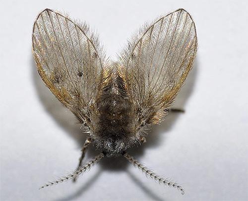 Si aparecieran pequeños insectos voladores en el baño o en el baño, podrían ser mariposas.