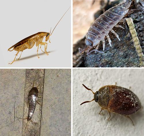Aprenda más sobre los diferentes tipos de insectos que se encuentran en los apartamentos, y también vea cómo se ven en las fotos ...