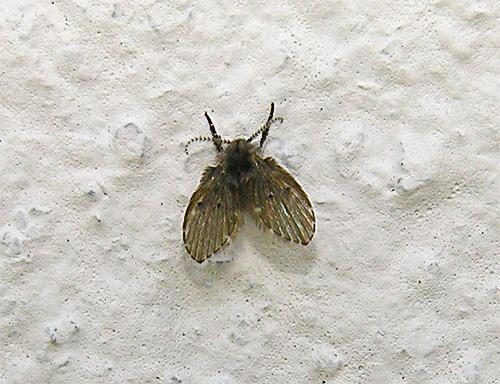 Mosca de la mariposa en la pared en el retrete.
