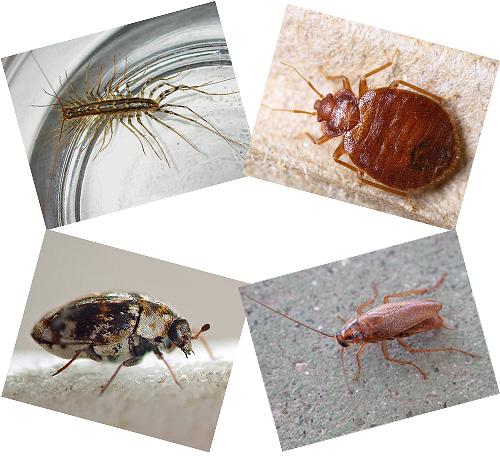 En la casa al lado de una persona pueden vivir muchos insectos, de los cuales hablaremos más, con fotografías, una descripción del modo de vida y las consecuencias del vecindario con ellos.