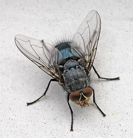 Y algunos insectos que se pueden encontrar en casa son huéspedes aleatorios de la calle.