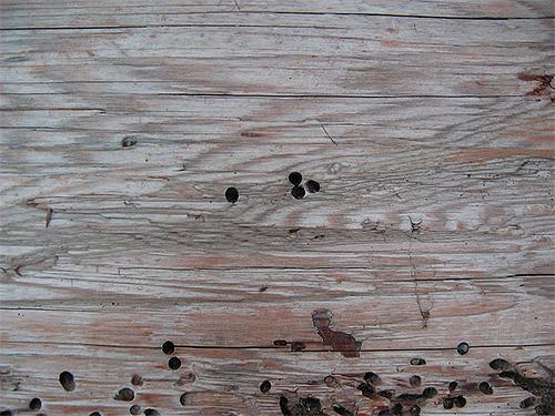 Las huellas del molinillo escarabajo.