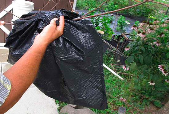 En el nido del avispón, colgado de una rama, simplemente puedes poner una bolsa con una solución de veneno vertida en él.