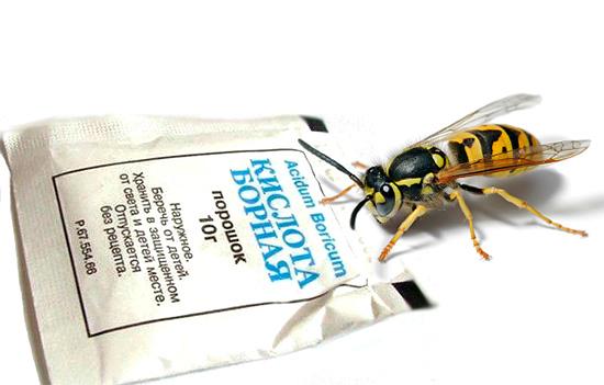 El ácido bórico es eficaz no solo contra las cucarachas, sino también contra las avispas.