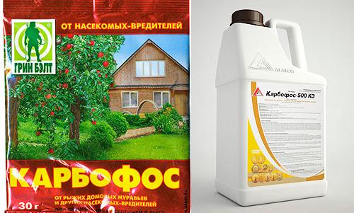 Karbofos se vende en polvo y en forma líquida.