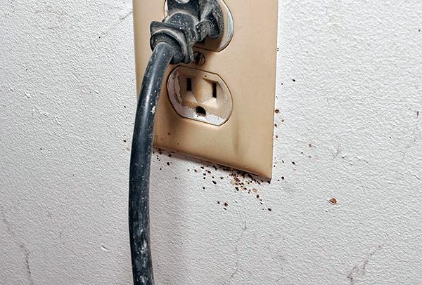 Los nidos de chinches pueden estar en los enchufes eléctricos ...