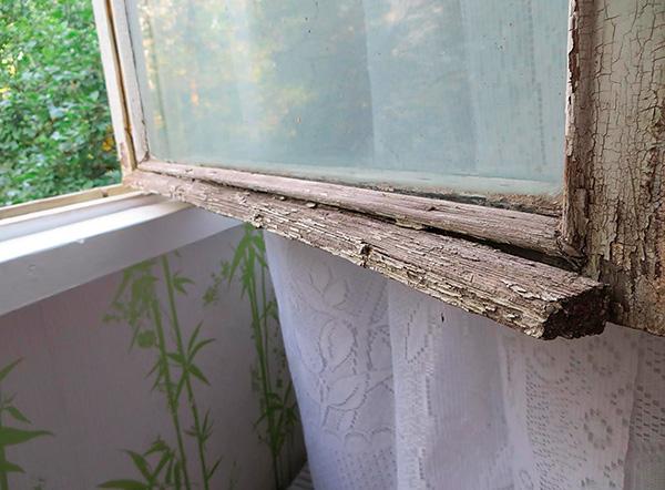 Las chinches pueden ingresar al apartamento a través de la pared exterior del edificio a través de las ranuras en las ventanas viejas.
