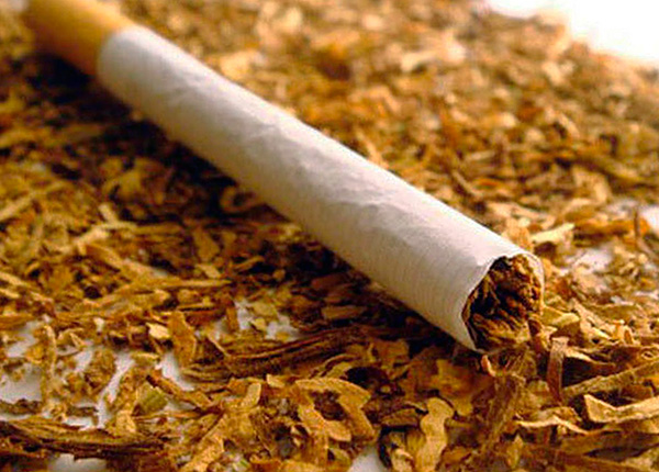 El tabaco (o más bien, la nicotina que contiene) es un medio altamente eficaz para la destrucción de insectos.