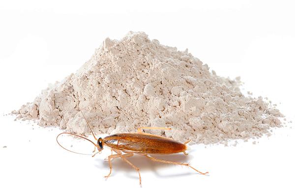 Los polvos insecticidas siguen siendo uno de los medios de cucarachas más populares hoy en día: continuaremos hablando sobre tales preparativos y hablaremos más ...